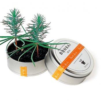 smp_tin_bonsai_LRG.jpg