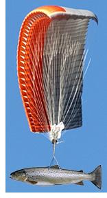 Fish Parachute (Images courtesy Google Images)