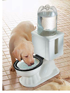 Refilling Toilet Dog Bowl (Image courtesy Collections Etc.)