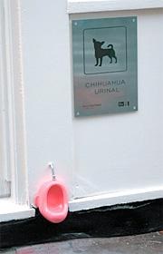 Chihuahua Urinal (Image courtesy NOTCOT)