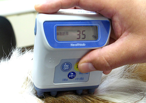 Body Fat Device For Dogs (Image courtesy TOKYOMANGO)