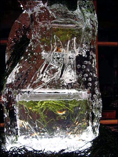 Ice Fish Tank