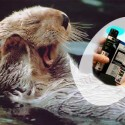 Ten Out Of Ten Sea Otters Agree: LG Philips Flexible Oil Water Display Is Pretty Slick