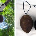 Hyper-Intelligent Coconuts Demand Quiet