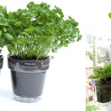 Windowherbs Pots Designed For The Urban Gardener