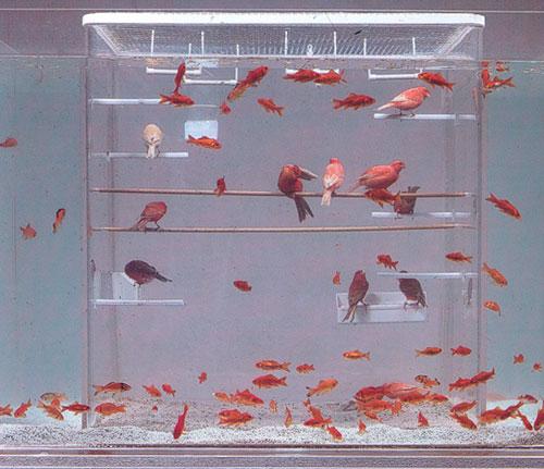 Bird Fish Tank