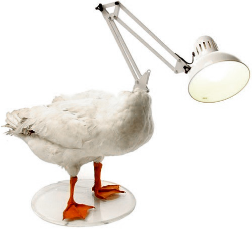 http://www.ohgizmo.com/wp-content/uploads/2008/01/duck_lamp.jpg