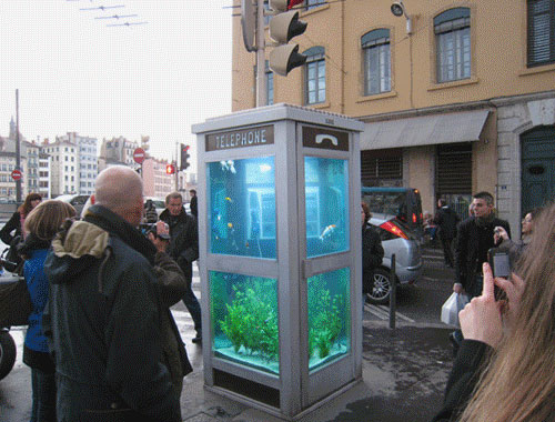 Phone Booth Fishtank