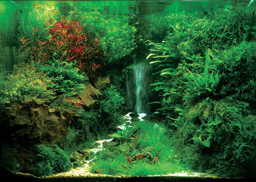 Fish Forest