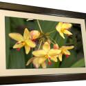 Smartparts  SP3200 32-Inch Digital Photo Frame