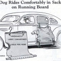 The Worst Way To Travel For Man's Best Friend