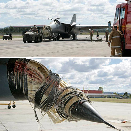 F-111 Hit By Pelican In Flight (Images courtesy News.com.au)