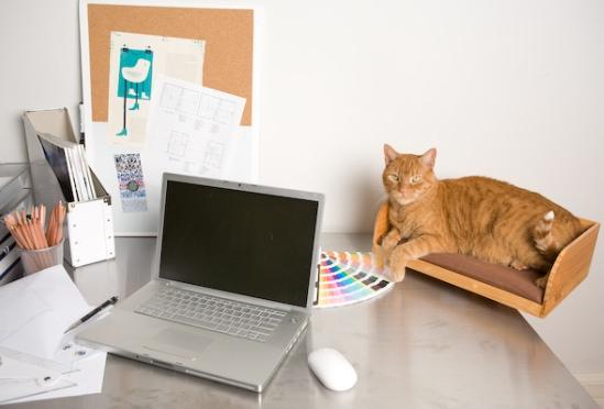 porta gatto da tavolo