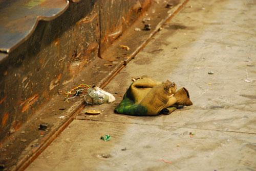 Dead Pleo