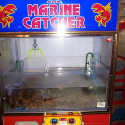 Live Lobster Claw Game – Come On, Lobstey!