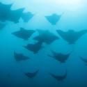 Fish Tank Friday: The Galapagos Islands