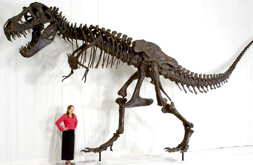 Tyrannosaurus Rex STAN Skeleton (Image courtesy Black Hills Institute)