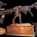 DINO200 Animated T-Rex Skeleton Turns A Night At The Museum Into A Night In Your Living Room