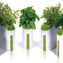 Power Plant Mini Hydroponic Planter – You Know, For 'Herbs'