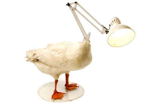 chickenlamp