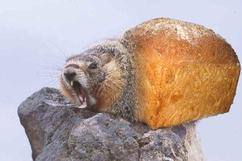bread_marmot