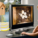 Nest Box With IR Camera Lets You Learn About The Birds And The Bees – Minus The Bees