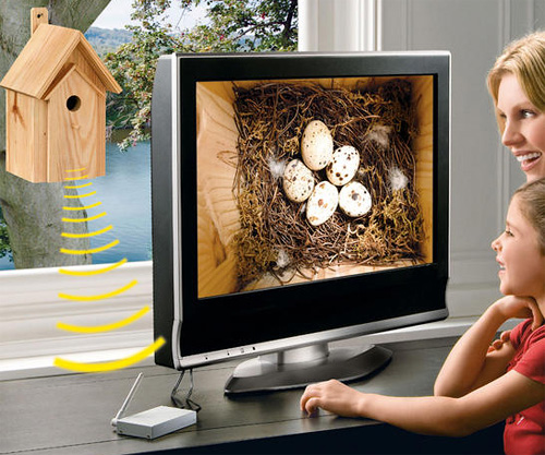 Nest Box with IR Camera (Image courtesy Pro-Idee)