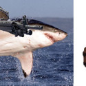 Bulletproof Life Jacket Foils Sharks With Guns