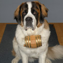 St. Bernard Dog Collar Barrel