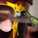 eYe2eYe Wearable Hummingbird Feeder