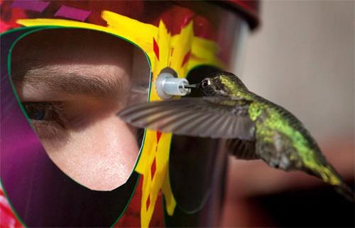 eYe2eYe Wearable Hummingbird Feeder (Image courtesy Doyle Doss)