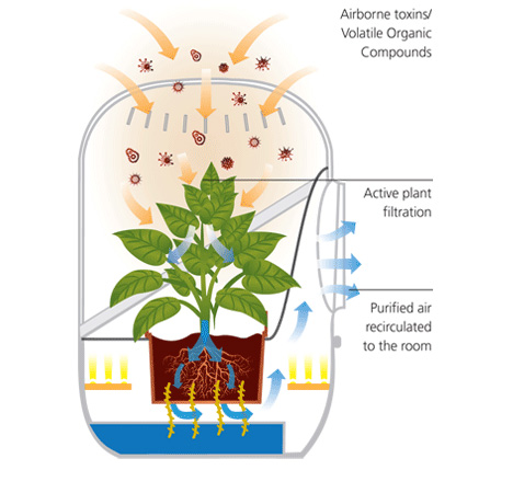 Plants Technology Clears Toxins For Better Natural