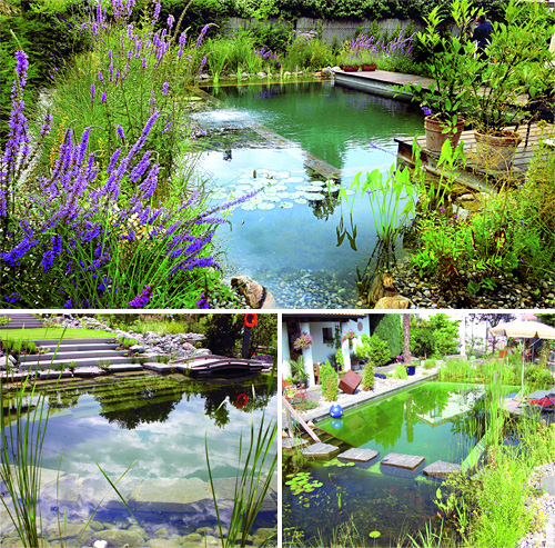 biotop natural pools like a billabong in your backyard