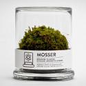The Mosser To Brighten Your Workspace