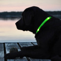 Glowdoggie Lets You Keep An Eye On Your Pooch, Even In The Dark