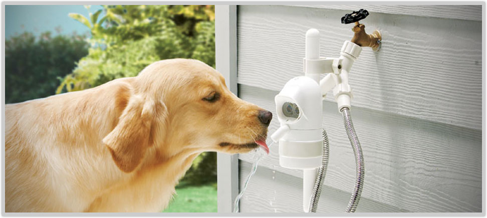 Funny Facebook Dog Water Dispenser Videos