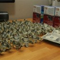 King of Stupid: Guy Caught Running a Red Light Pays Ticket with 137 Origami Pig Dollars