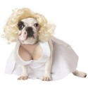 Slutty Halloween Costumes for Your Dog Don't Look So Slutty After All