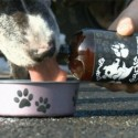 Dogoholics Anonymous: Dawg Grog 'Beer' for Dogs is Here