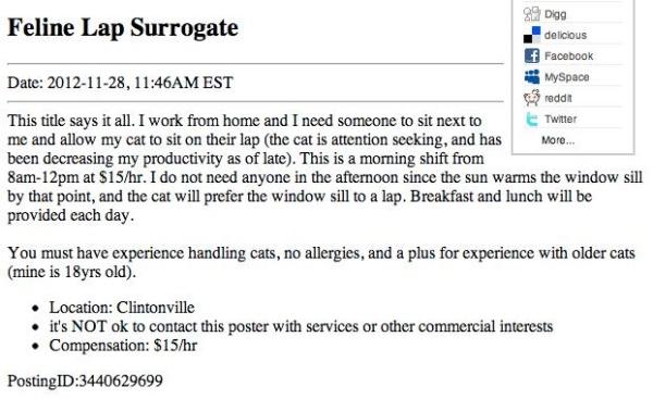 Feline Lap Surrogate