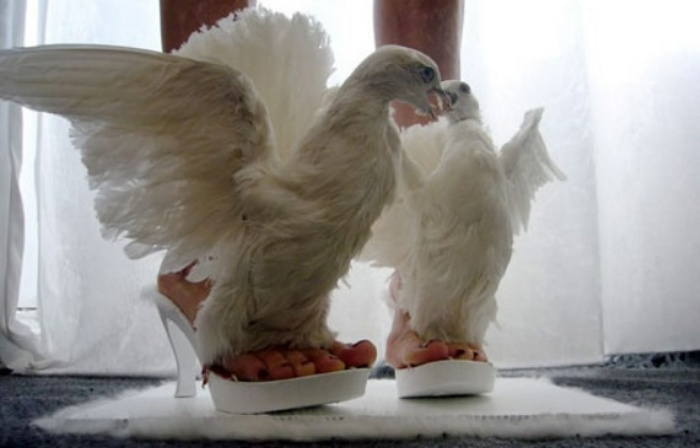 Dove Shoes