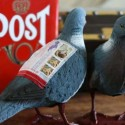 Carrier Pigeons Make a Comeback, But Pigeon Post Only Lets You Send Mail the Regular Way