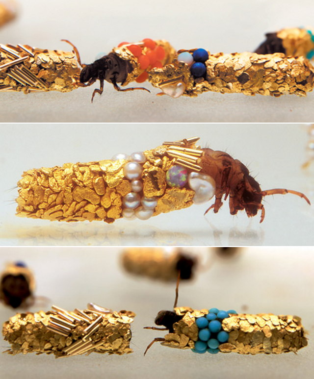 caddisfly-jewerly-cases