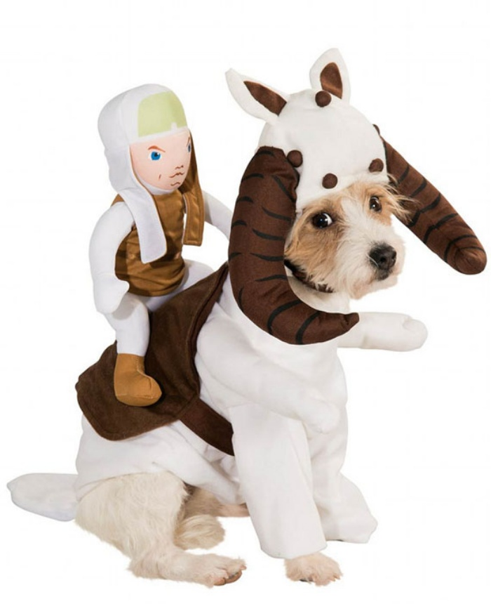 Star Wars Dog2
