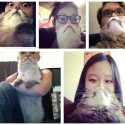 Cat Beards: Cat Required, Facial Hair Optional