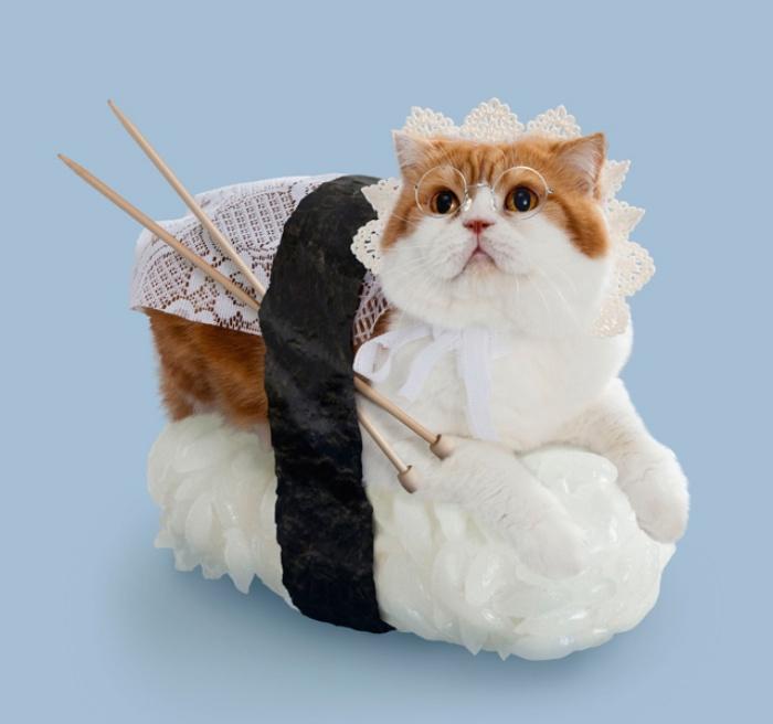 Sushi Cats0