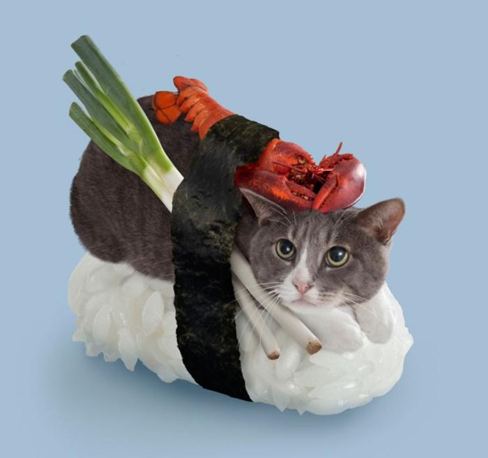 Sushi Cats2