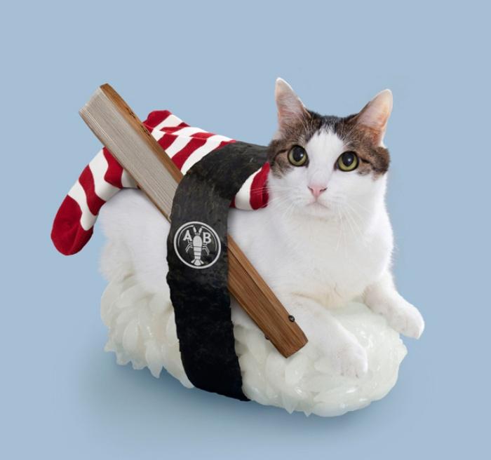Sushi Cats3