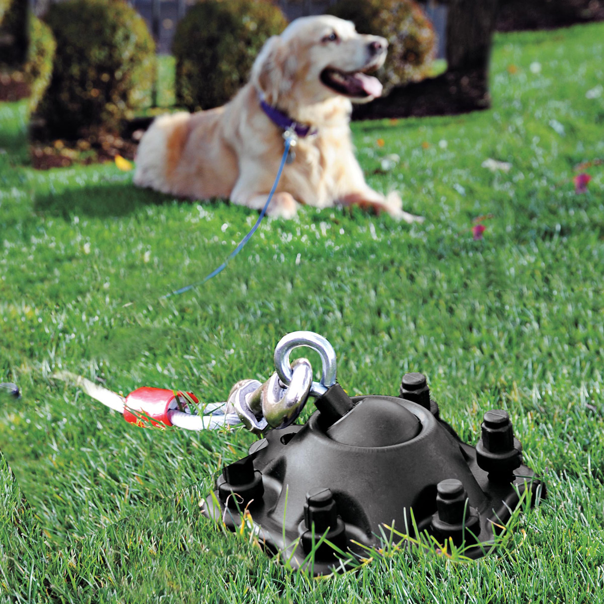 Best Harness For Dogs Tie Out