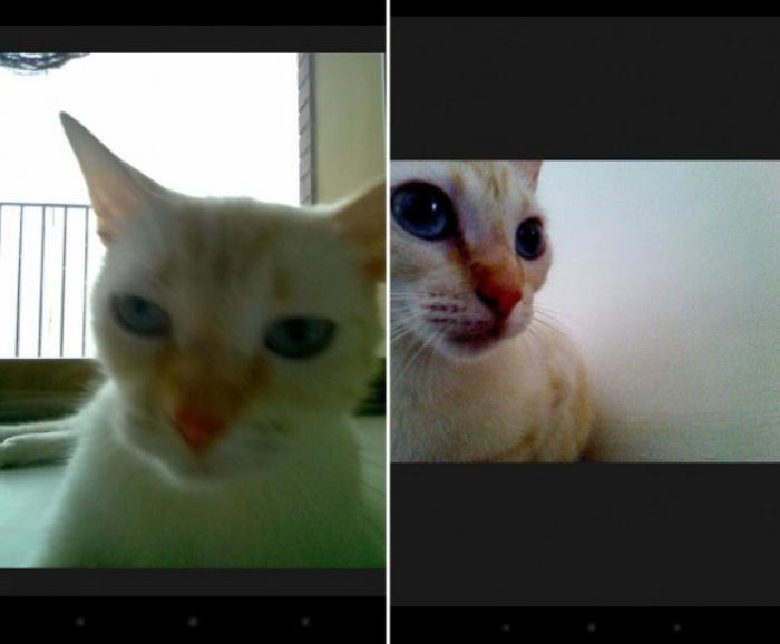Snapcat